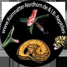 Kornnatter Nordhorn & IB-Reptiles